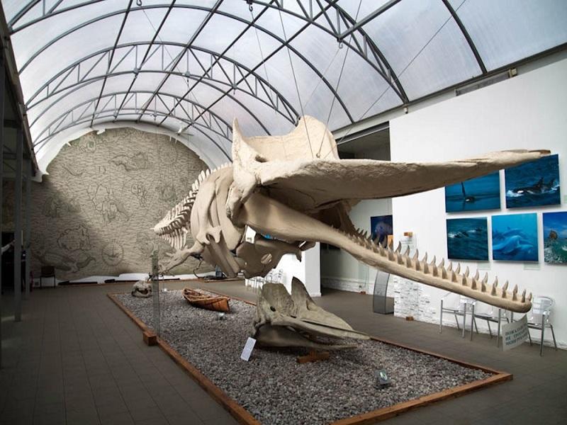 Калининград главные достопримечательности экскурсии музеи