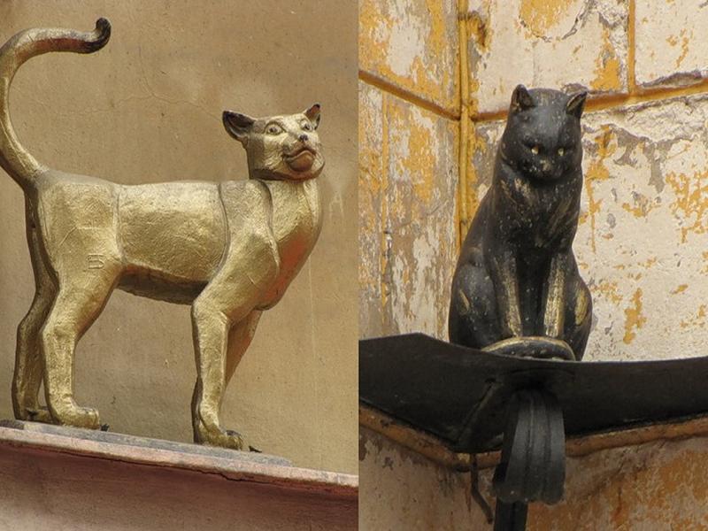коты Питера, что посмотреть в городе бесплатно